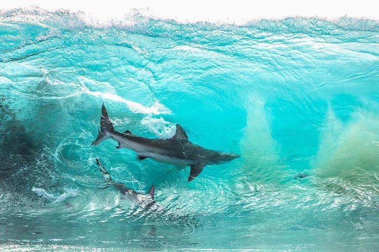 Imagen de The real locals | Surf AHIERRO!