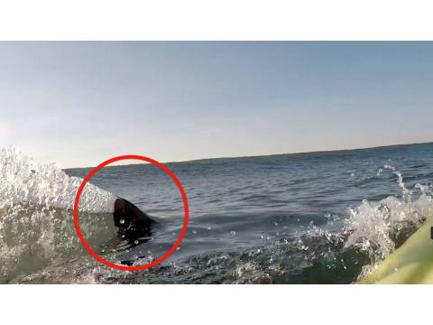 Ignacio Salazar y el tiburón blanco - Surf AHIERRO!