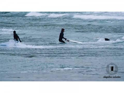 Focas VS Surfers - Surf AHIERRO!