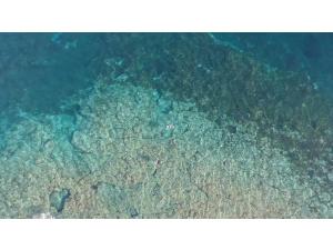 Imagen: CANARY ISLANDS OCTOBER 2018 | Surf AHIERRO!